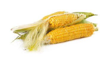 corn-1751321_1280